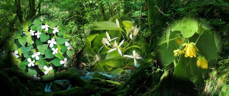 清らかな自然の中で育まれた草本木皮の生命力をじっくりと時間をかけて膨らませた 自然美容