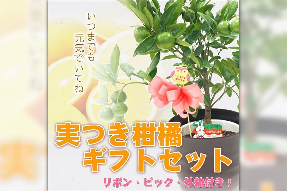 最強のお花!タイタンビカスを育てよう!