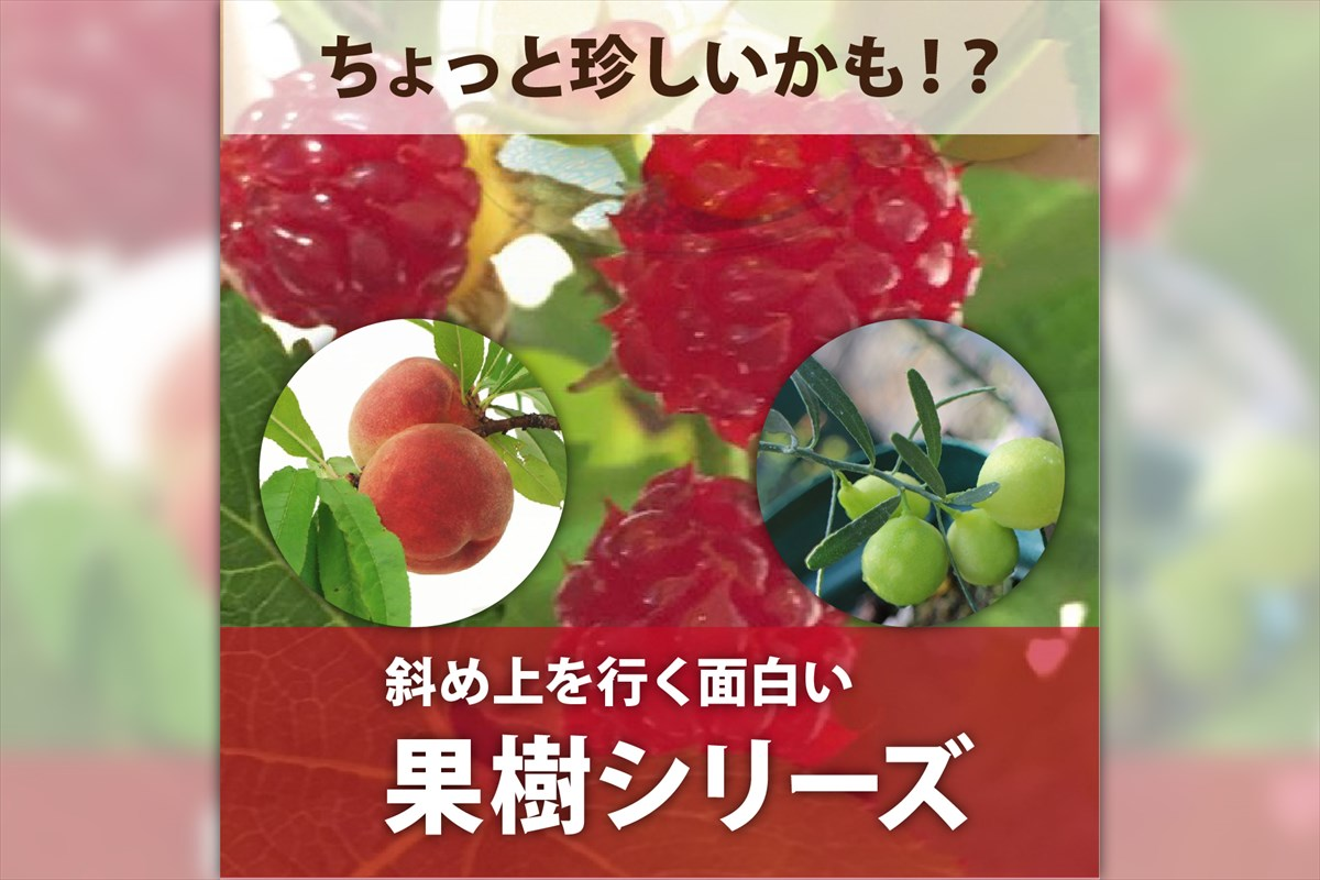 サンスベリアいろいろ(珍奇植物「)