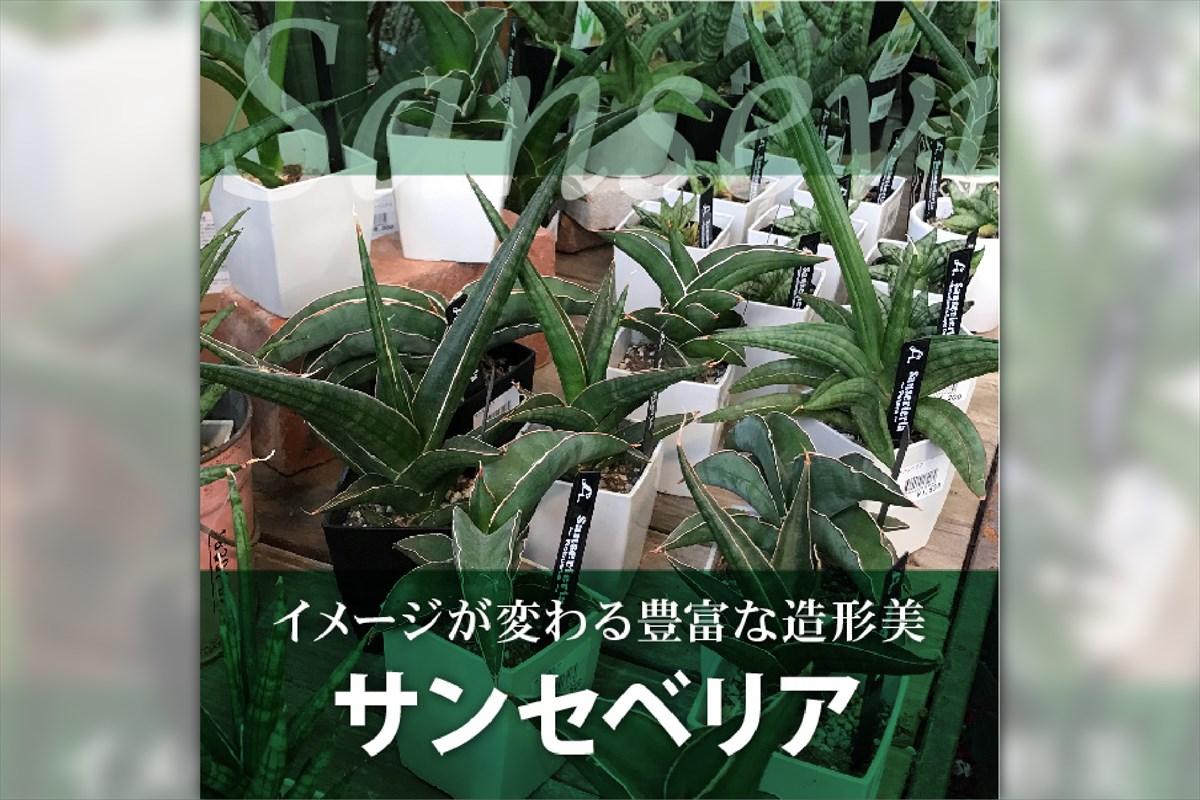 赤塚植物園は60周年